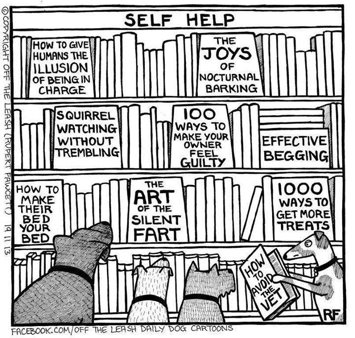 livres de survie pour chien