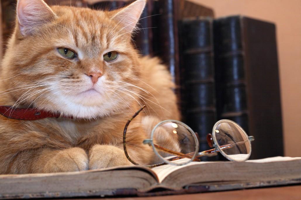 chat trouver une maison d edition